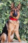 Dog B-5546