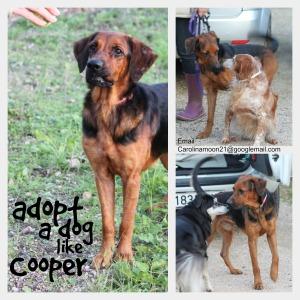 Cooper1