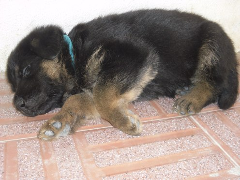 Sleepy!