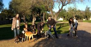 Some of the Saturday morning PYC gang walking the Son Reus dogs